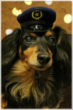 H28102504犬のおまわりさん