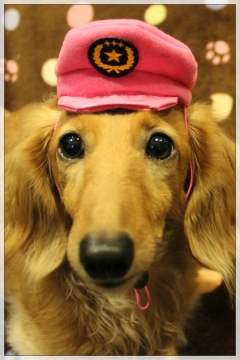 H28102505犬のおまわりさん
