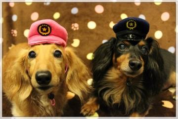 H28102508犬のおまわりさん