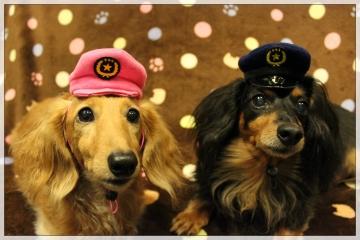 H28102506犬のおまわりさん