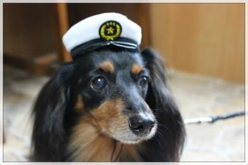 H28102509犬のおまわりさん