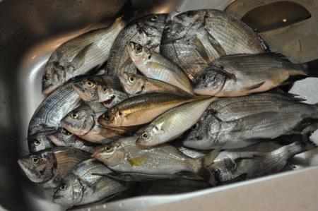 fish20161019.jpg