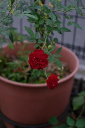 red20161014-1.jpg