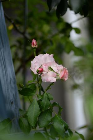 rosen20161016-1.jpg