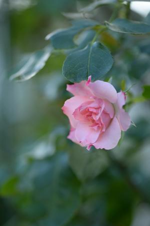 rosen20161017-1.jpg