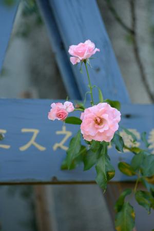 rosen20161017-2.jpg
