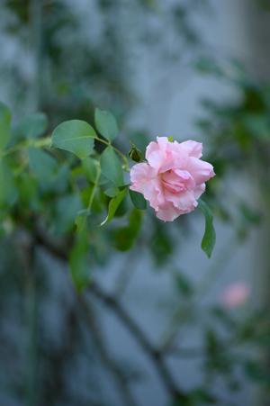 rosen20161017-3.jpg