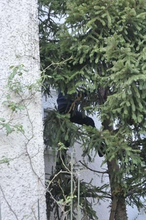 tree20161103-2.jpg