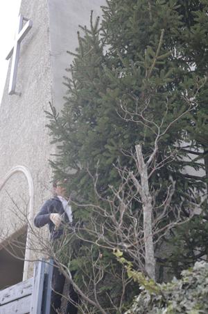 tree20161103-6.jpg