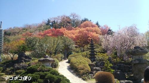 20160418 花7