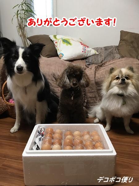 20160826 卵1