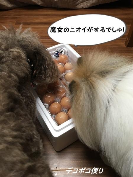 20160826 卵3