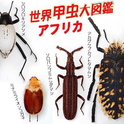 2016-05-28afro-beetle.jpg