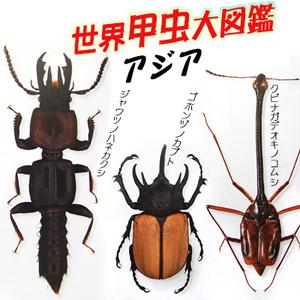 2016-05-28ajia-beetle.jpg