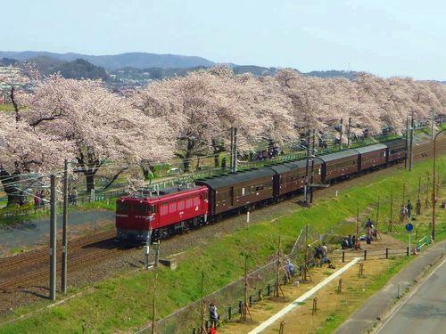 船岡白石川堤桜2016_18ED75旧型客車
