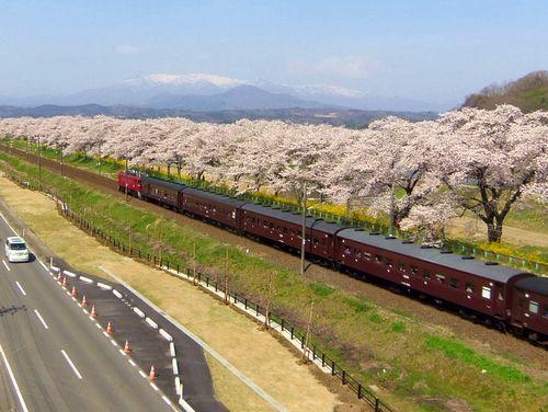 船岡白石川堤桜2016_19ED75旧型客車