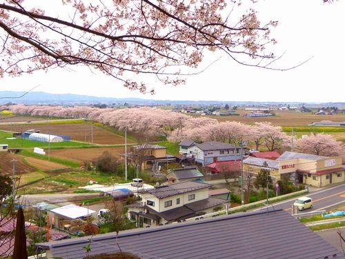 南方千本桜1