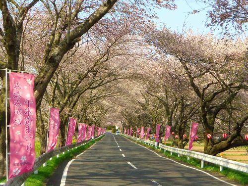 南方千本桜2