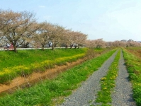 南方千本桜3