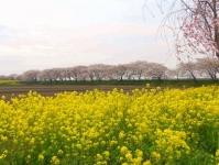 南方千本桜4