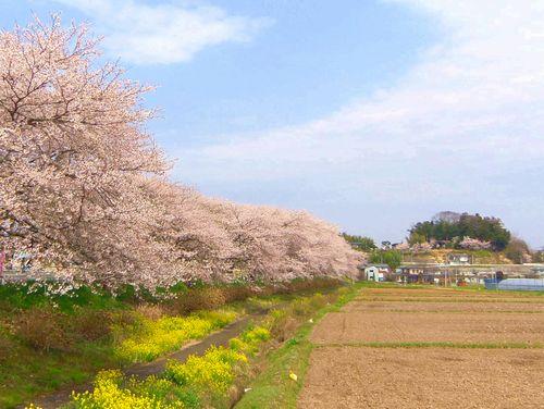 南方千本桜5