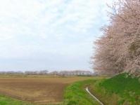 南方千本桜9