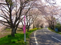 南方千本桜10