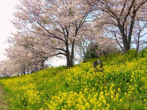 南方千本桜11