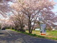 南方千本桜12