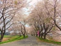 南方千本桜13