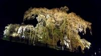 三春滝桜2016 7 ライトアップ