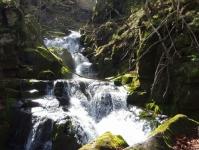 奥入瀬渓流3寒沢の流れ