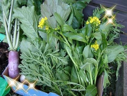 野菜キラキラ