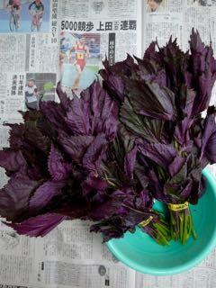 2016年 紫蘇ジュース - 1