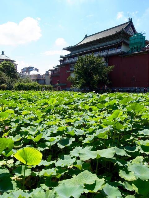 台北植物園 - 1 (4)