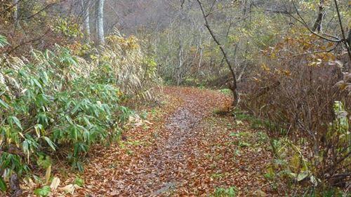 紅葉の中にトラップが仕掛けてあります。