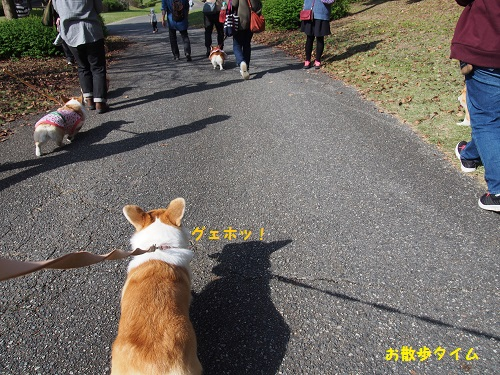 お散歩タイム