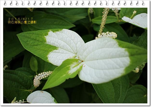 IMG_1311-1.jpg