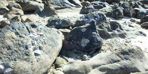 海岸の貝003