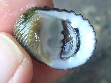 海岸の貝017
