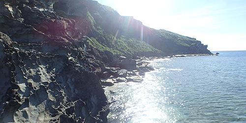 海岸の貝024