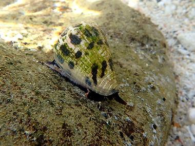海岸の貝036