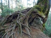 木の生命力