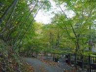 大使館跡の林
