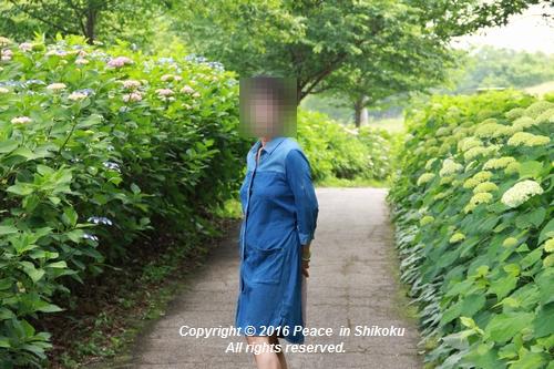 ajisai-0606-6078.jpg