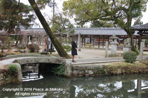 amayako-0314-2604.jpg