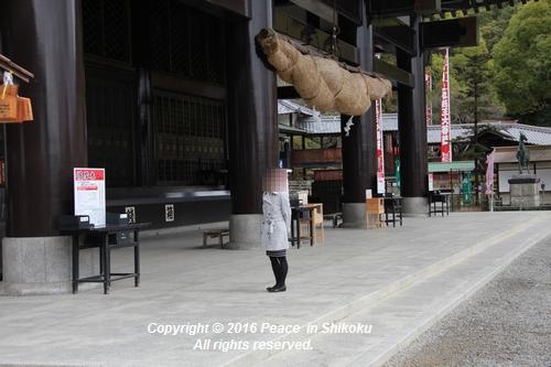 amayako-0314-2735.jpg