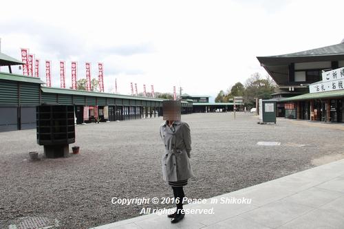 amayako-0314-2740.jpg