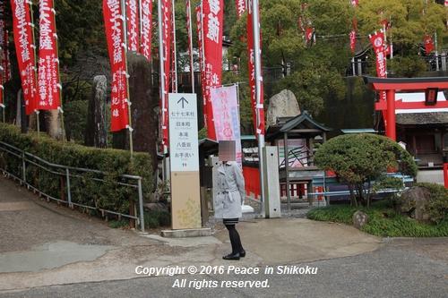 amayako-0314-2749.jpg