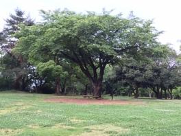 公園0601_0